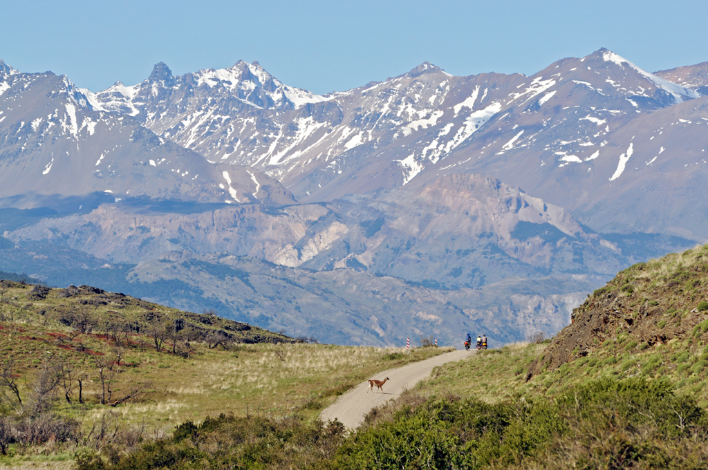 Biking in Valle Chacubuco's Parque Patagonia with guanacos.
